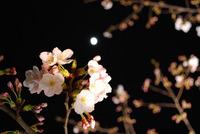 2009_04_03_1.jpg